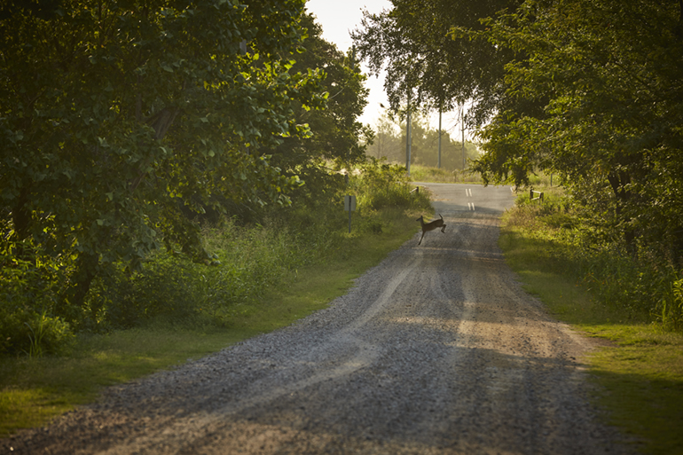 Adventure Road Tishomingo National Wildlife Refuge