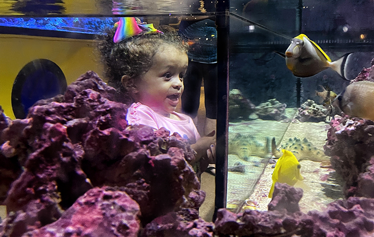 Little girl looking at an aquarium of fish and coral.