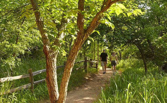 Adventure Road Martin Park Nature Center