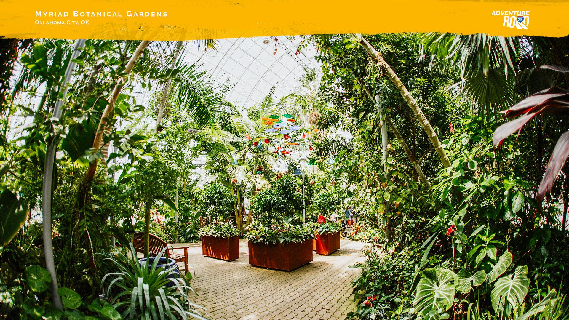 adventure-road-zoom-background-myriad-botanical-gardens