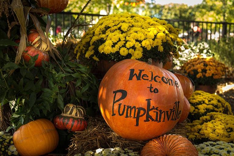 Pumpkins and mums at Pumpkinville