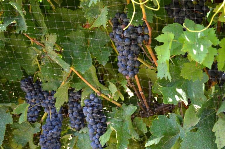 Adventure Road Waddell Vineyards
