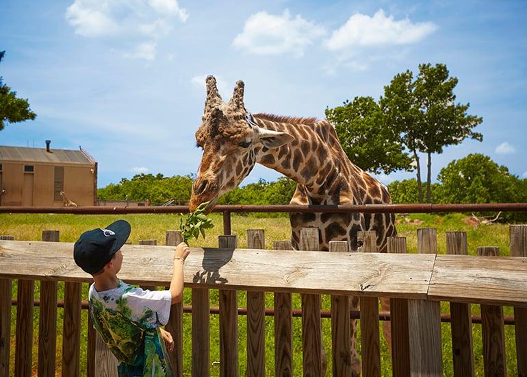 Adventure Road Oklahoma City Zoo