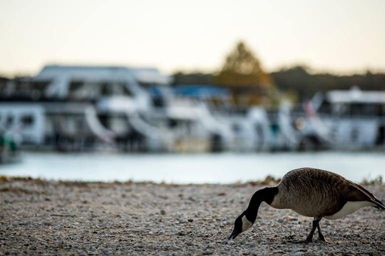 Adventure Road Lake Murray Bird